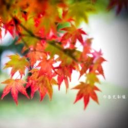 2016大俠攝影旅遊 福壽山之旅