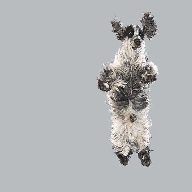 flying3.jpg